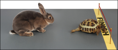 Hare and tortise